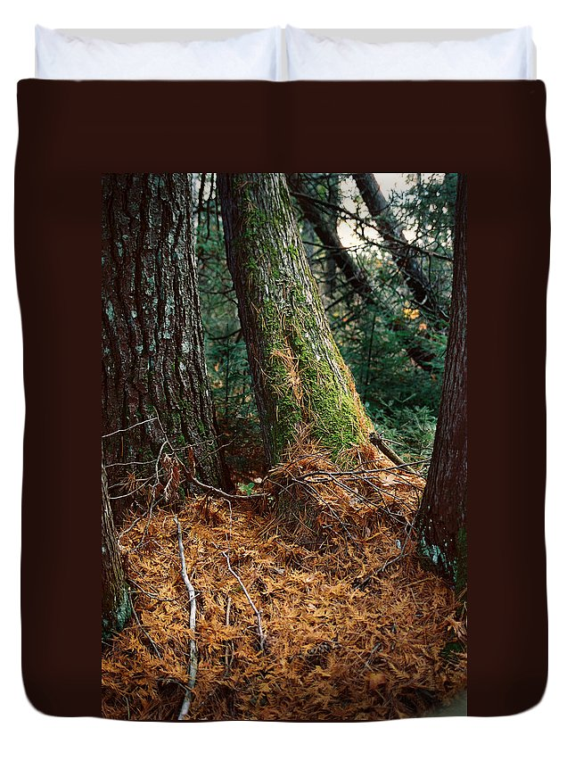 Trees Duvet Cover featuring the photograph Fall Carpet by Ron Weathers