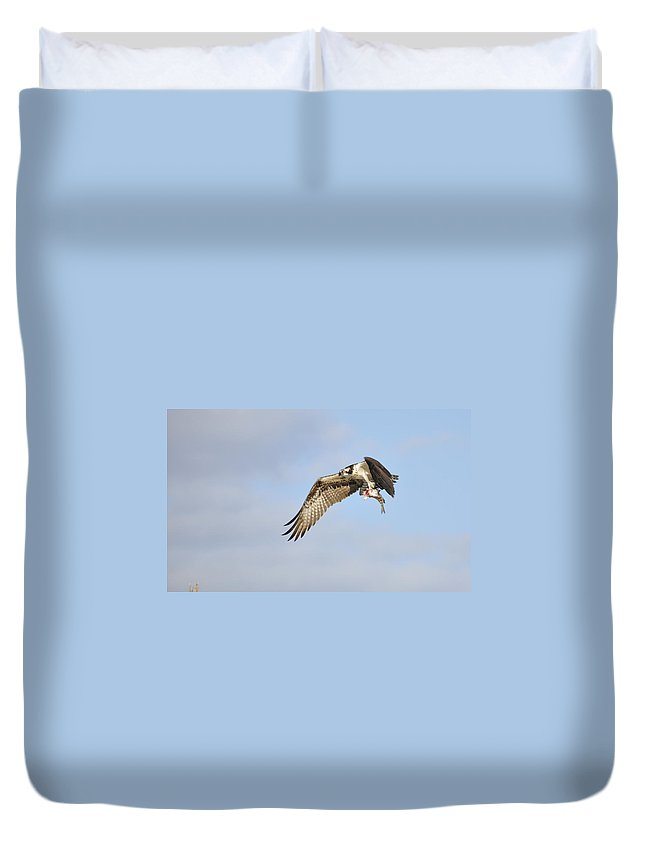 Osprey Duvet Cover featuring the photograph Osprey Lunch To Go I by Christine Stonebridge