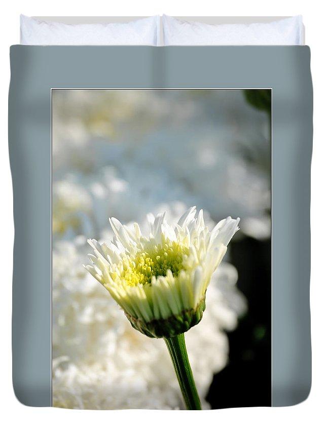 Duvet Cover featuring the photograph 0002 Leucanthemum Cog Hill Awakening by Michael Frank Jr