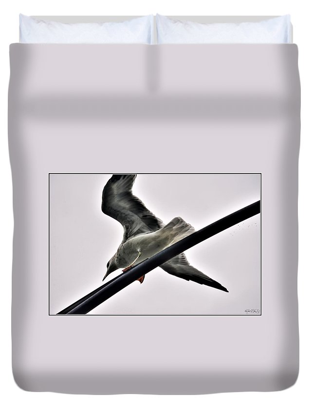 Duvet Cover featuring the photograph 002 Gull To Out Do Wallenda by Michael Frank Jr
