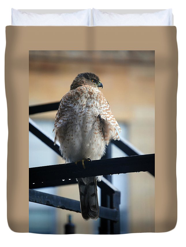 Duvet Cover featuring the photograph 02 Falcon by Michael Frank Jr