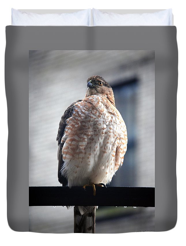 Duvet Cover featuring the photograph 04 Falcon by Michael Frank Jr