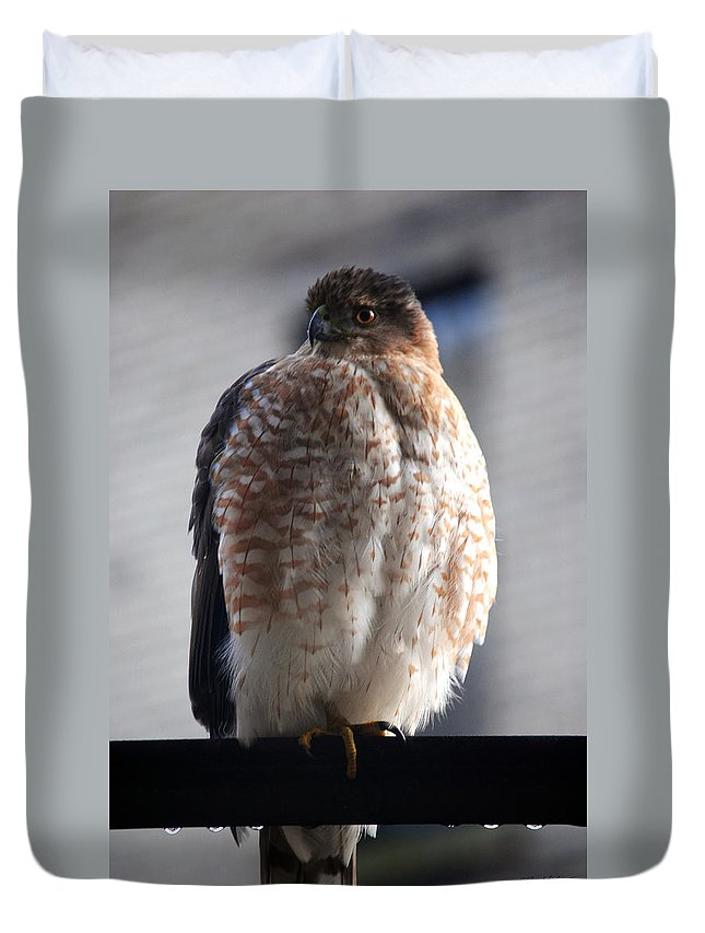 Duvet Cover featuring the photograph 06 Falcon by Michael Frank Jr