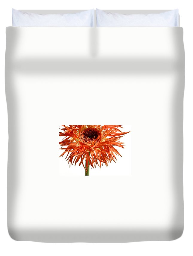 Gerbera Photographs Duvet Cover featuring the photograph 0687c-022 by Kimberlie Gerner