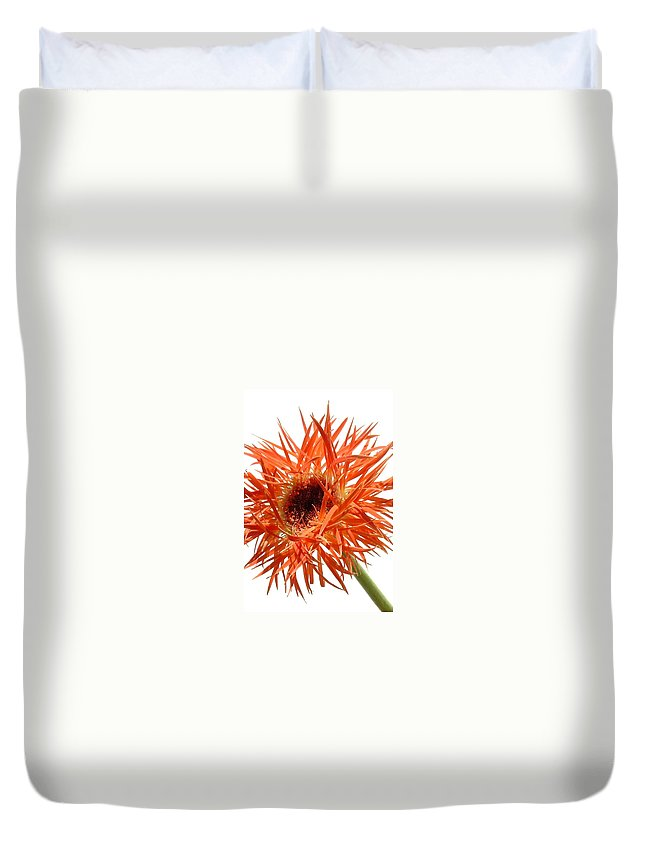Gerbera Photographs Duvet Cover featuring the photograph 0688c-004 by Kimberlie Gerner