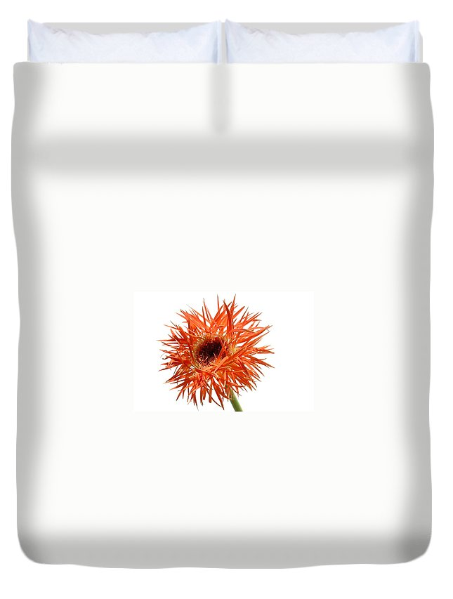 Gerbera Photographs Duvet Cover featuring the photograph 0688c-019 by Kimberlie Gerner