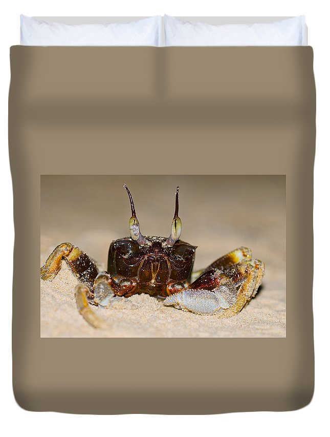 Animal Duvet Cover featuring the photograph A Crab On The Shore by U Schade