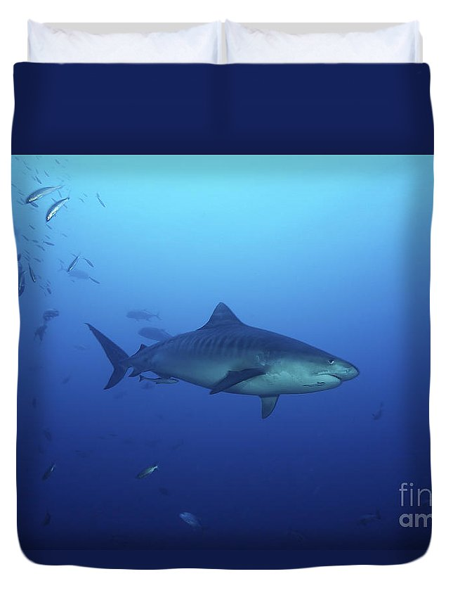 Fiji Duvet Cover featuring the photograph A Large 10 Foot Tiger Shark Swims by Terry Moore
