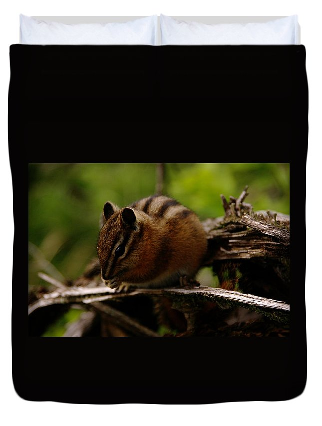 Animals Duvet Cover featuring the photograph A Little Chipmunk by Jeff Swan