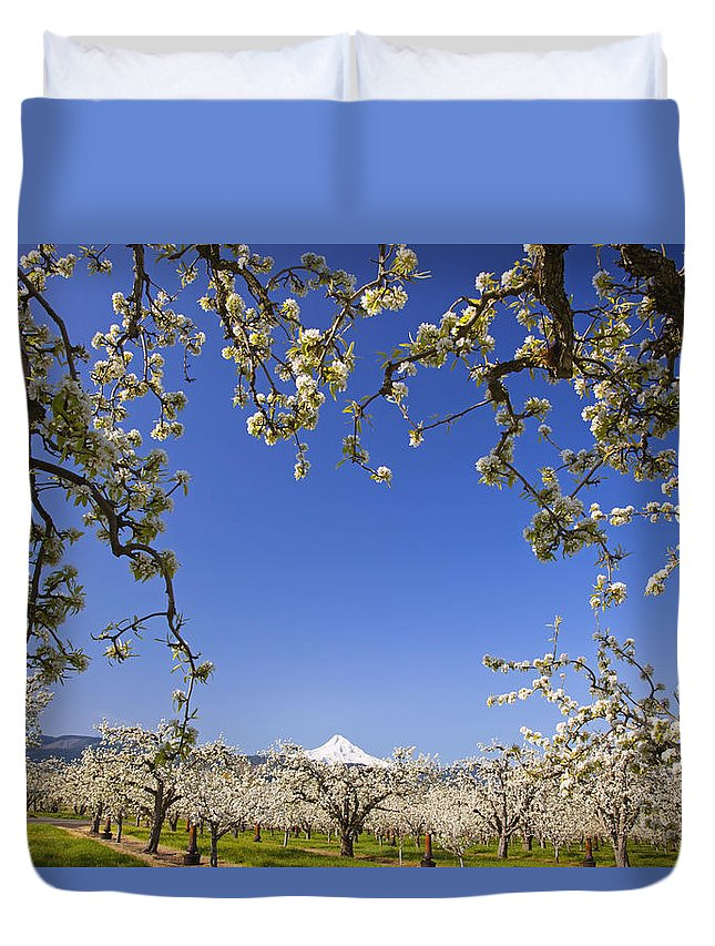 Blue Sky Duvet Cover featuring the photograph Apple Blossom Trees In Hood River by Craig Tuttle