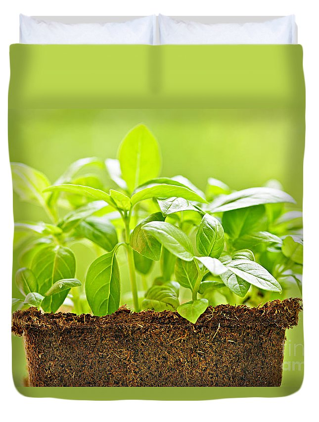 Basil Duvet Cover featuring the photograph Basil by Elena Elisseeva