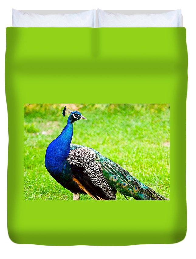 Adult Duvet Cover featuring the photograph Beautiful And Pride Peacock On A Lawn by U Schade