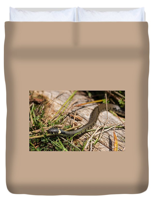 British Grass Snake Duvet Cover featuring the photograph British Grass Snake by Dawn OConnor