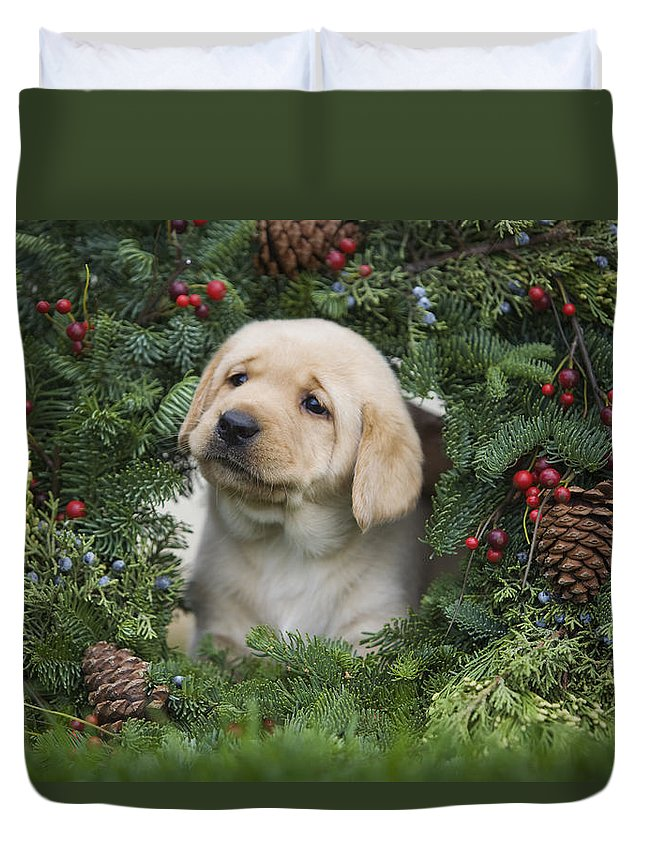 Adorable Duvet Cover featuring the photograph Christmas Puppy by Ron Dahlquist - Printscapes