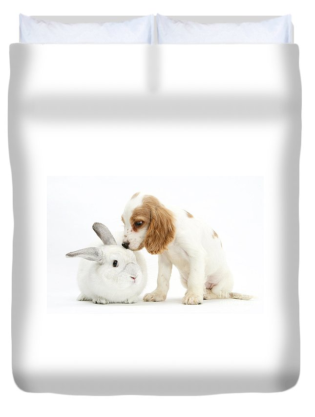 Nature Duvet Cover featuring the photograph Cocker Spaniel And Rabbit by Mark Taylor