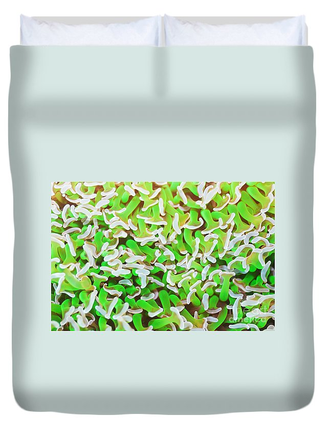 Green Duvet Cover featuring the photograph Coral Texture by MotHaiBaPhoto Prints