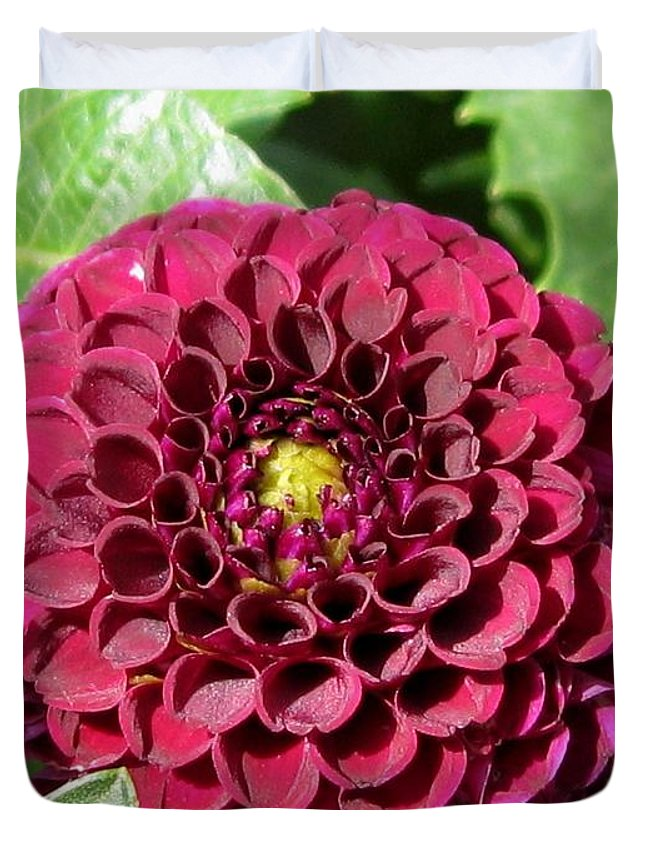 Dahlia Duvet Cover featuring the photograph Dahlia Named Pride Of Place by J McCombie