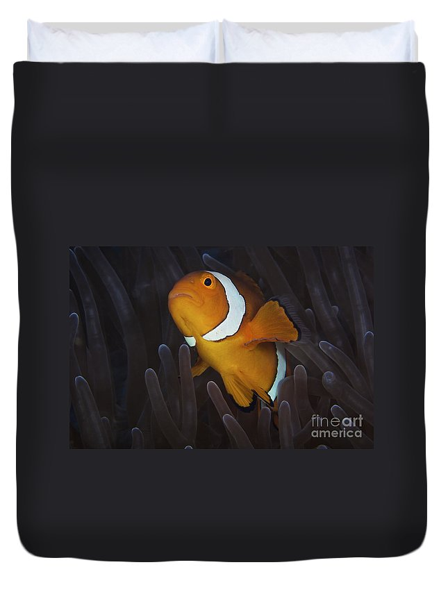 Swimming Duvet Cover featuring the photograph False Ocellaris Clownfish In Its Host by Terry Moore