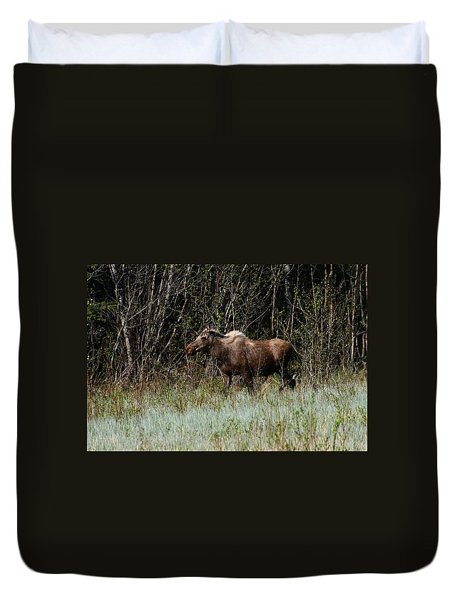 Alaska Duvet Cover featuring the photograph Feeding Along by Doug Lloyd