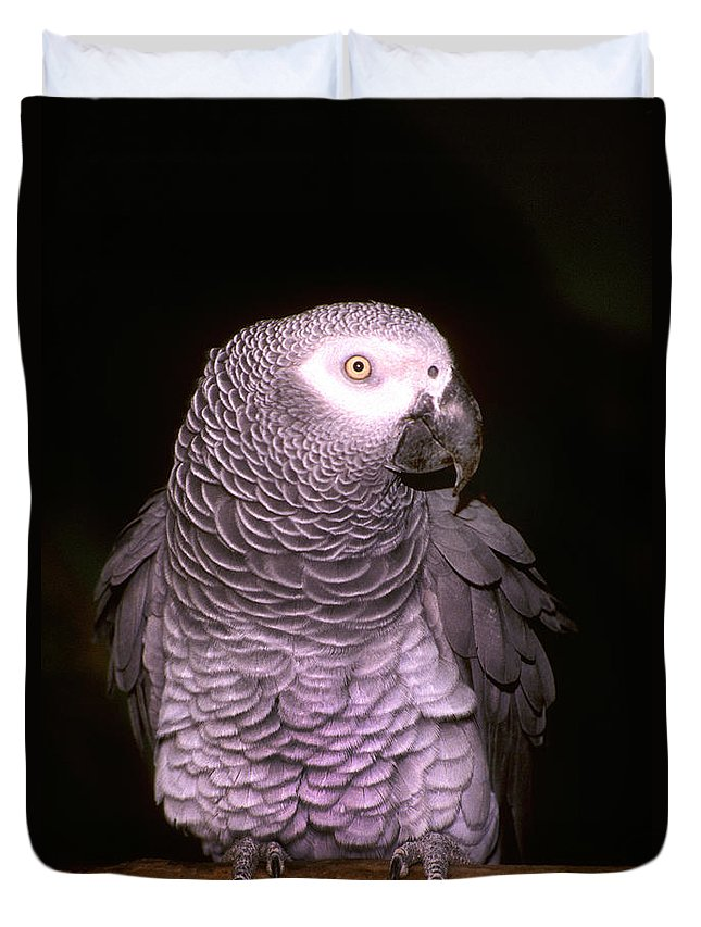 Parrot Duvet Cover featuring the photograph Gray Parrot by Paul W Faust - Impressions of Light