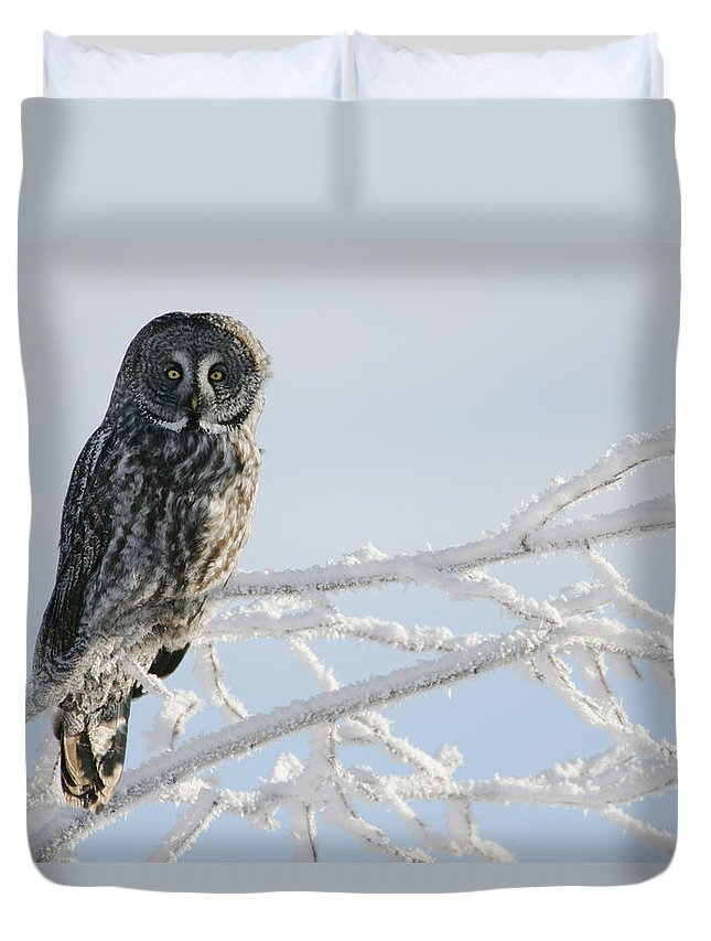 Light Duvet Cover featuring the photograph Great Grey Owl, Northern British by Robert Postma