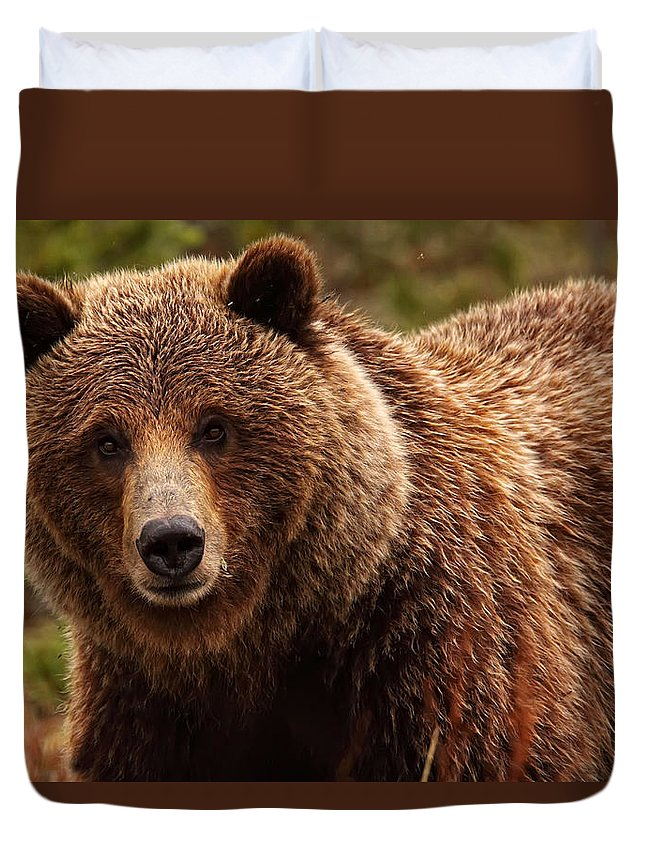 Light Duvet Cover featuring the photograph Grizzly Bear, Yukon by Robert Postma