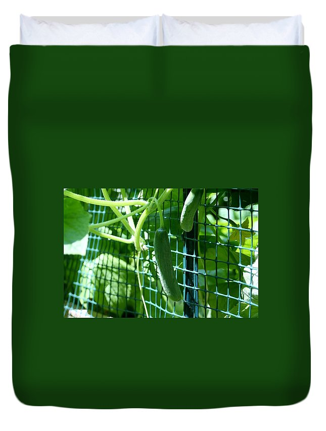 Cucumbers Duvet Cover featuring the photograph Hanging Cucumbers by Barbara S Nickerson