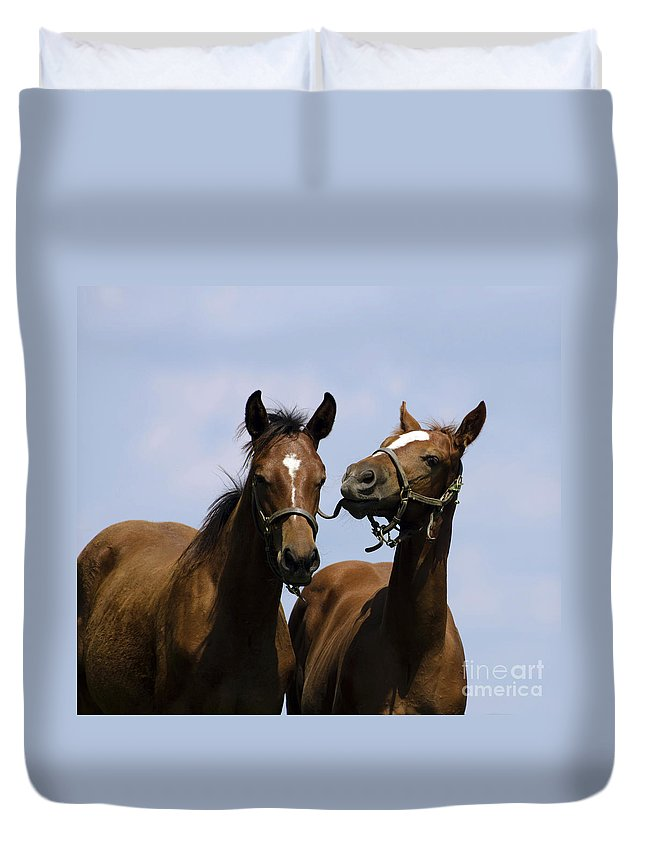 Horse Duvet Cover featuring the photograph Horse Foul Play Iv by Terri Winkler