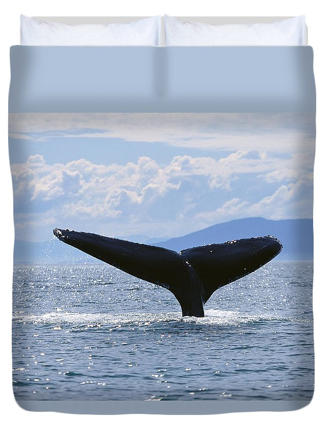 Animal Art Duvet Cover featuring the photograph Humpback Lifting Fluke by John Hyde - Printscapes