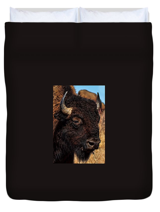 Kansas Duvet Cover featuring the photograph Kansas Buffalo by Alan Hutchins