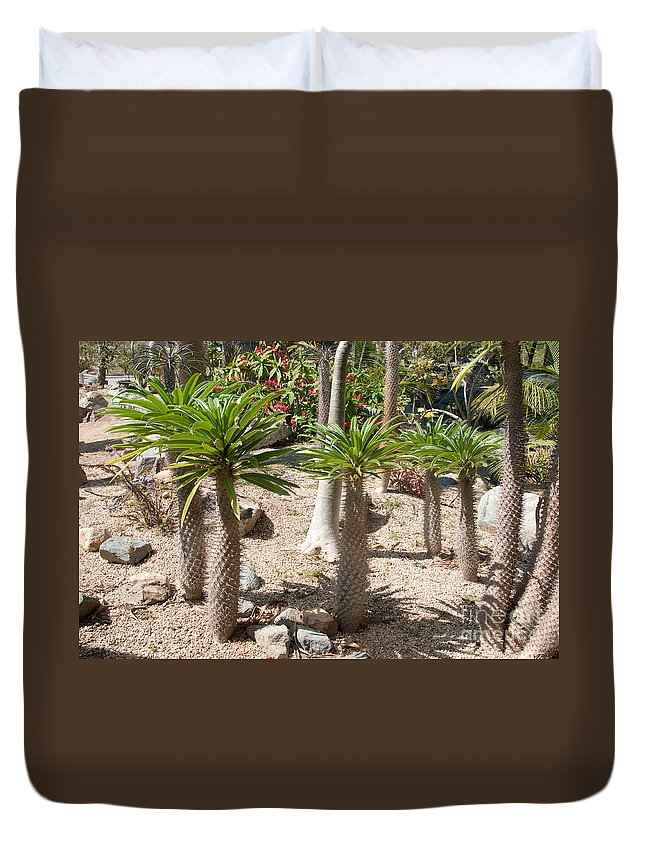 Balboa Park Duvet Cover featuring the digital art Madagascar Palms by Carol Ailles