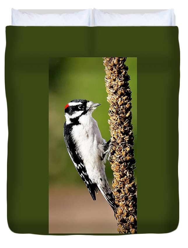 Afternoon Duvet Cover featuring the photograph Male Downy Woodpecker by Albert Seger