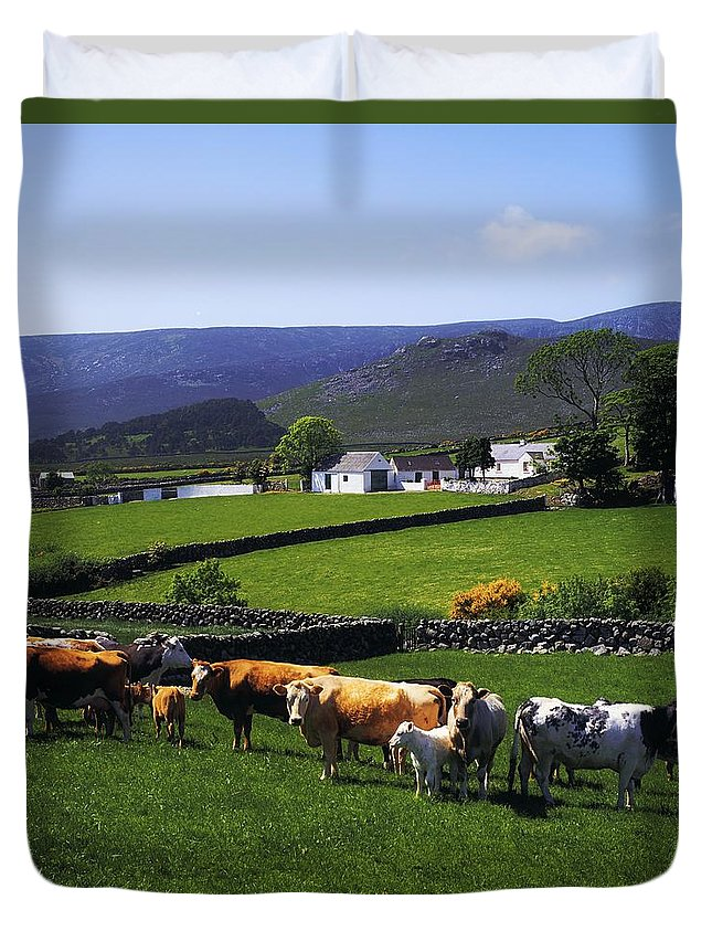 Animals Duvet Cover featuring the photograph Mourne Mountains, Co Down, Ireland by The Irish Image Collection