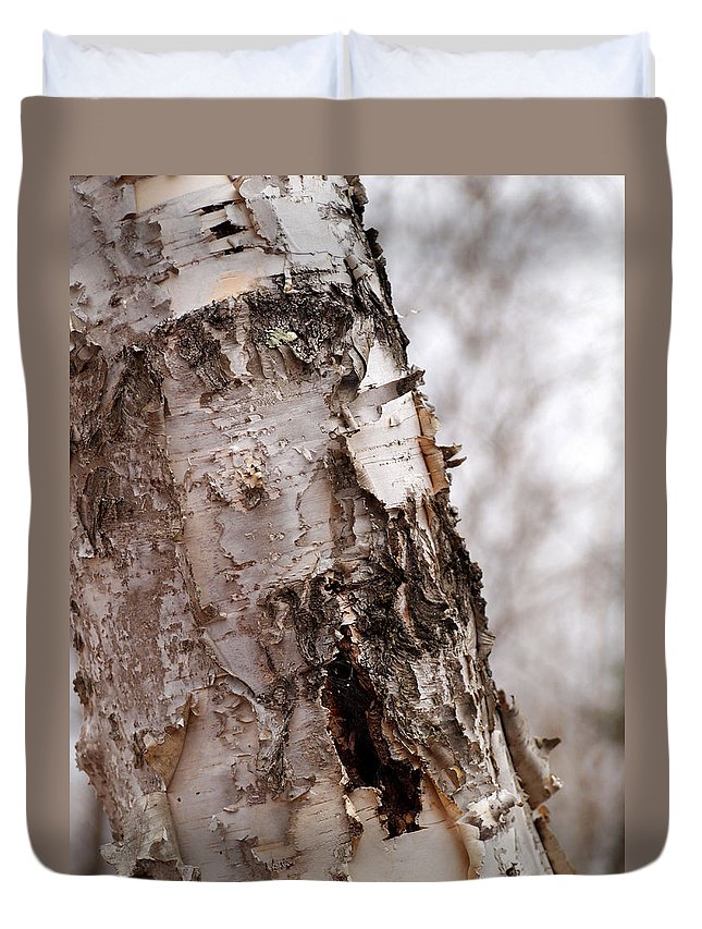 Birch Tree Duvet Cover featuring the photograph November Birch by Angie Rea