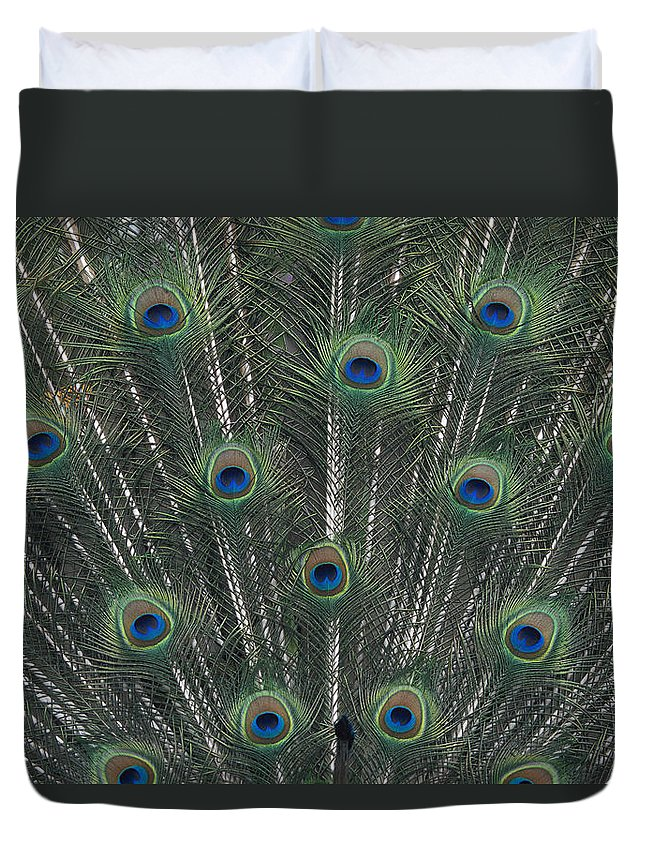Animal Art Duvet Cover featuring the photograph Peacock Feathers by Greg Vaughn - Printscapes
