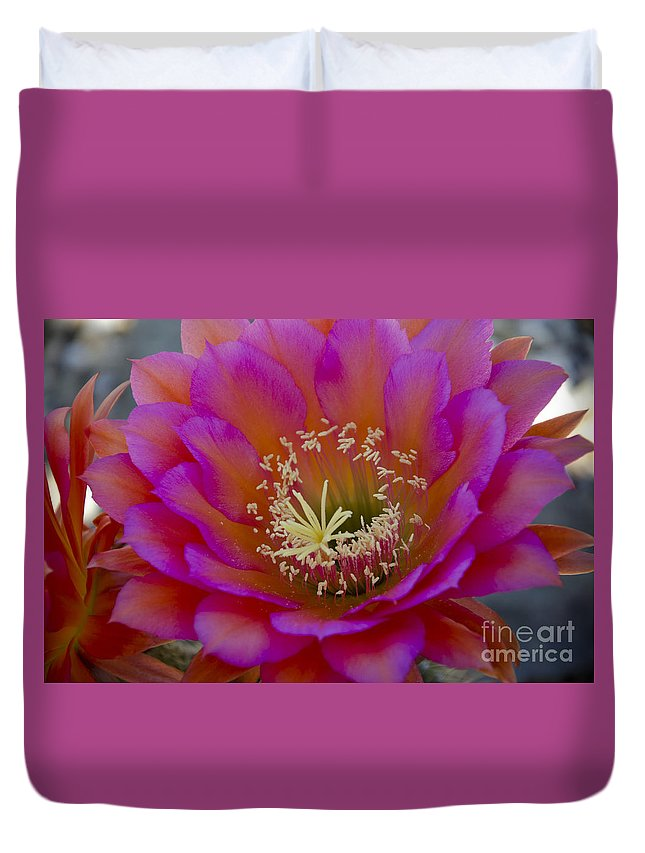 Red Duvet Cover featuring the photograph Pink And Orange Cactus Flower by Jim And Emily Bush