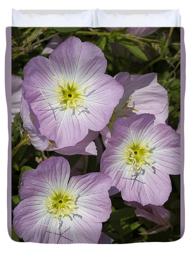 Oenothera Speciosa Duvet Cover featuring the photograph Pink Evening Primrose Wildflowers by Kathy Clark