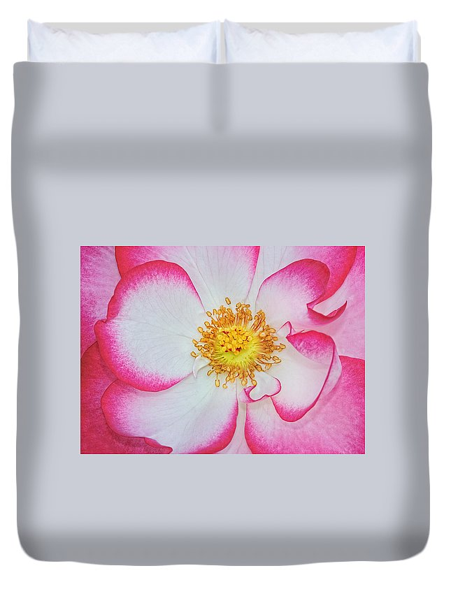 Rose Duvet Cover featuring the photograph Red And White by Dave Mills