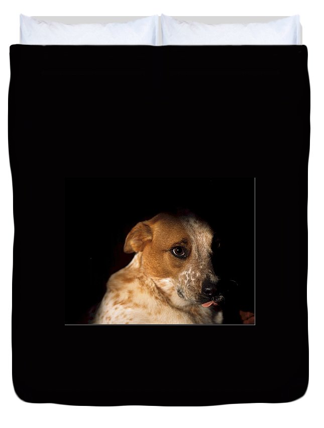 Animal Duvet Cover featuring the photograph Red Heeler Portrait by One Rude Dawg Orcutt