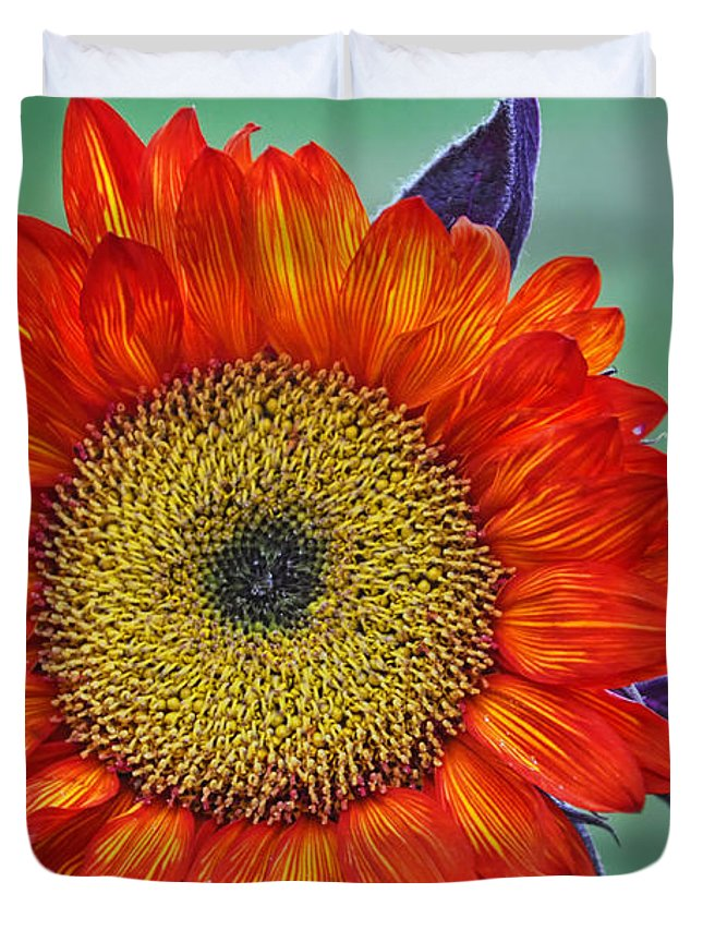 Red Sunflower Duvet Cover featuring the photograph Red Sunflower by Saija Lehtonen