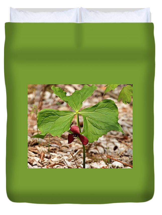 Red Trillium Duvet Cover featuring the photograph Red Trillium by Lloyd Alexander