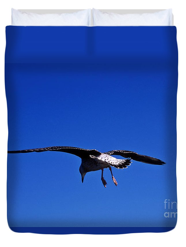 Animal Duvet Cover featuring the photograph Seagull In Flight by John Greim