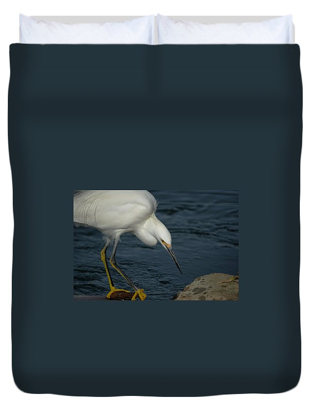 Snowy Egret Duvet Cover featuring the photograph Snowy Egret 8 by Ernie Echols
