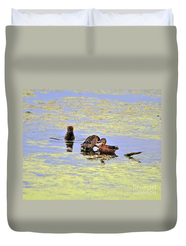 Duck Duvet Cover featuring the photograph Three Of A Kind by Al Powell Photography USA