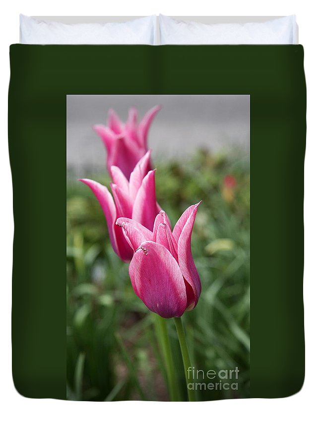 Tulips Duvet Cover featuring the photograph Three Tulips by Christiane Schulze Art And Photography