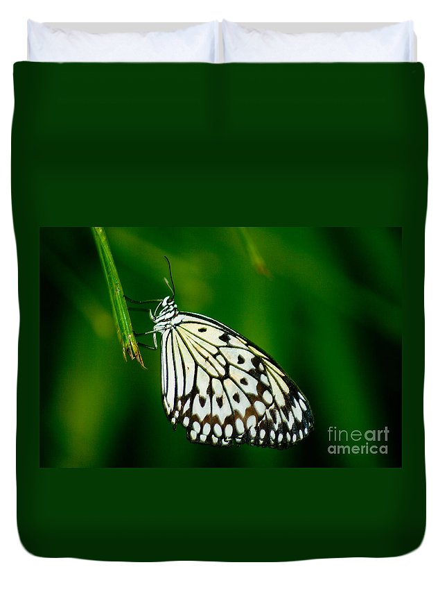 White Duvet Cover featuring the photograph Tree Nymph by Louise Magno