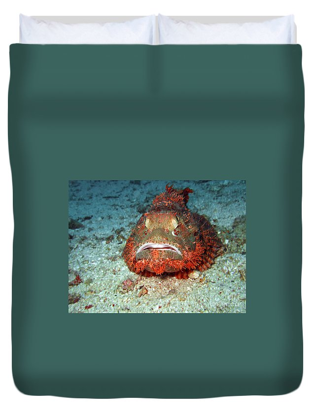 Poison Duvet Cover featuring the photograph Tropical Fish Scorpionfish by MotHaiBaPhoto Prints
