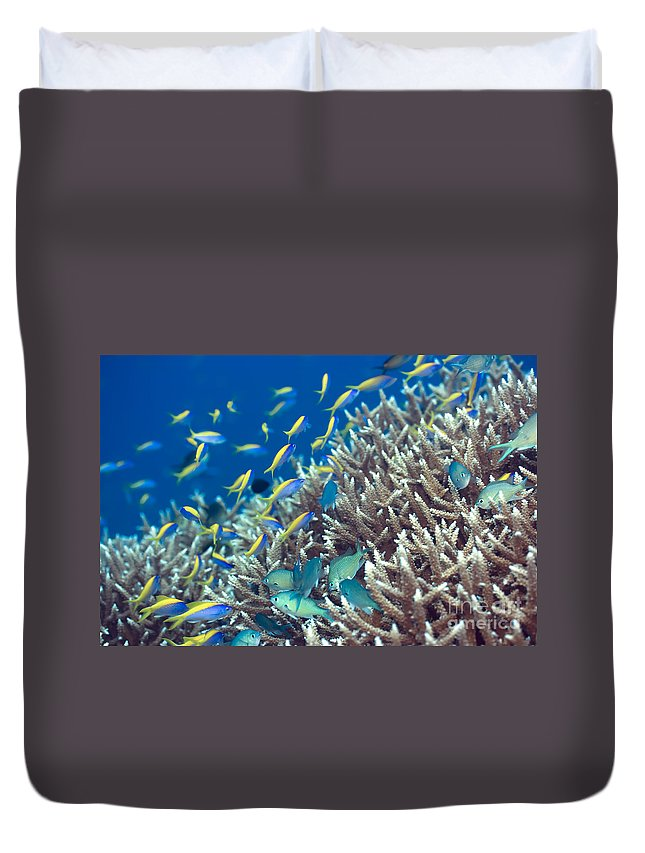 Yellow Duvet Cover featuring the photograph Underwater Landscape by MotHaiBaPhoto Prints
