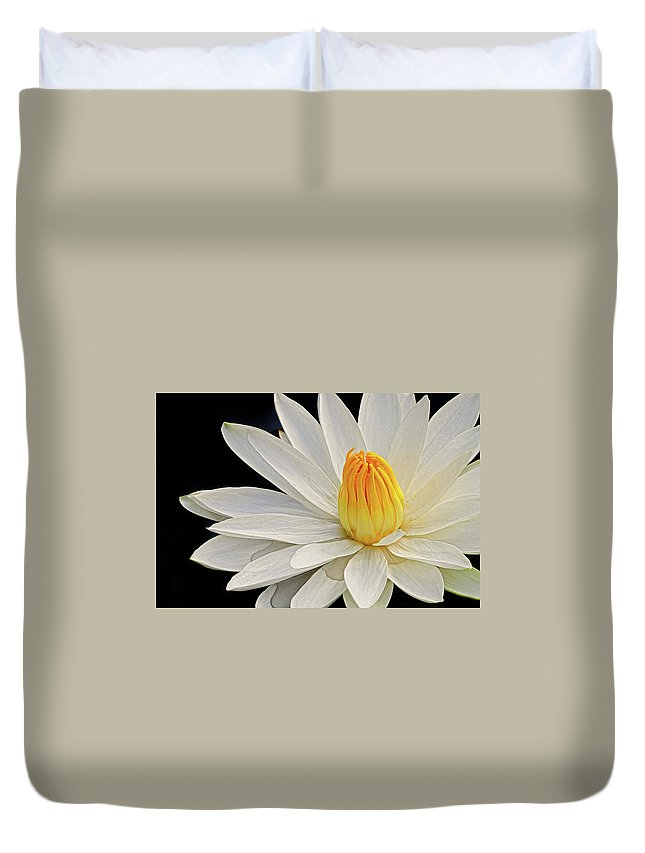 Waterlily Duvet Cover featuring the photograph White Waterlily by Dave Mills