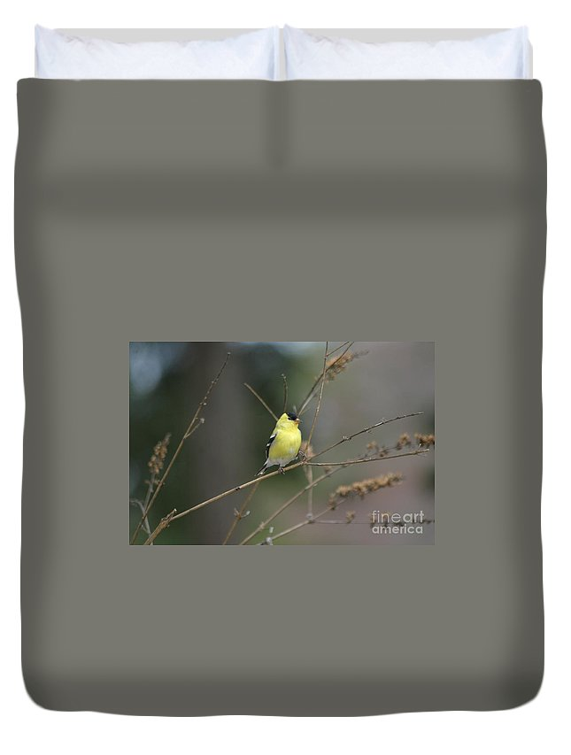 Birds Duvet Cover featuring the photograph Yellow Finch by Living Color Photography Lorraine Lynch